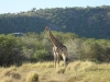 zuidafrika_2002_-1035