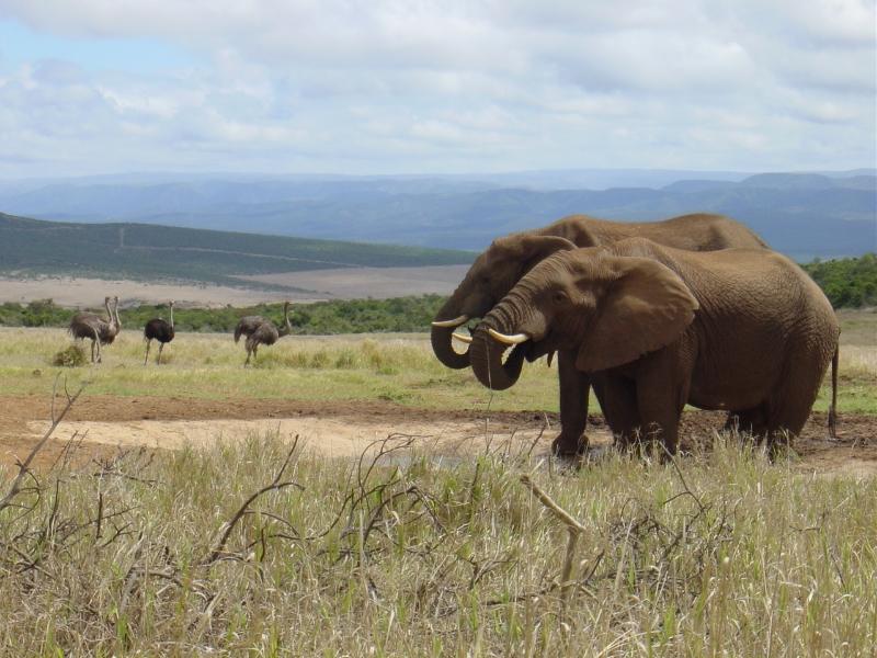 zuidafrika_2002_-1059