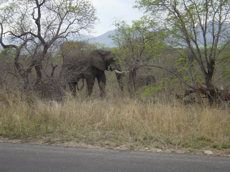 zuidafrika_2004_-1239