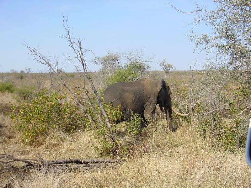 zuidafrika_2004_-1265
